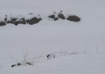 Tåke, surt, kaldt, snø og januar.