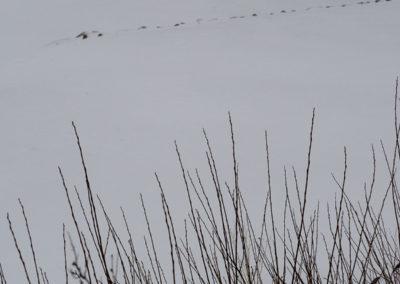 Surt, kaldt, snø og januar.