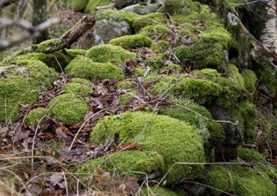 Grønn mose mot Haraldsheia, og snømangel i februar.