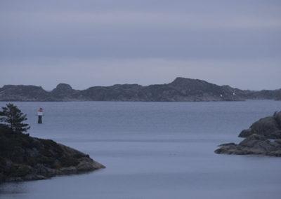 To svaner på vei mot Skjernøya.