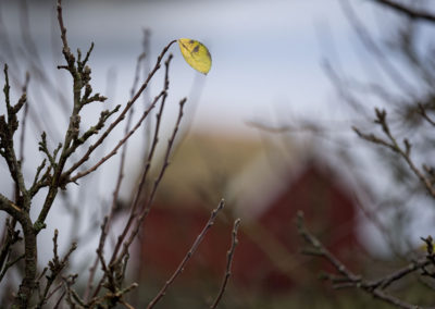 Ingen tvil. November er nådeløs: Vinteren lurer snart rundt neste hjørne.