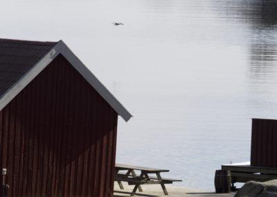 Stille i Ørp i april.