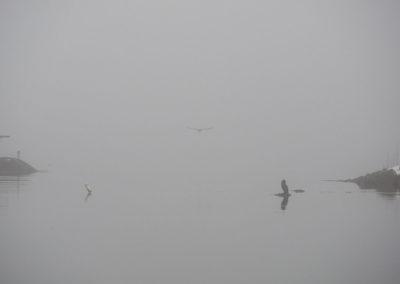 Noen sjøfugler overvintrer i Skogsøysund.