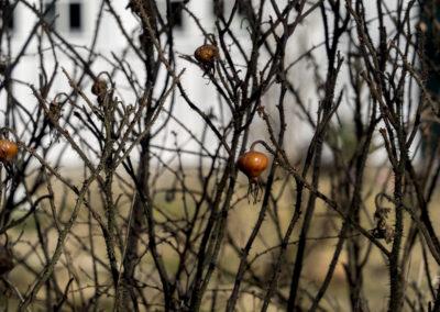 Fuglevik i mars. Sola begynner å varme, og nypene sitter fra ifjor.
