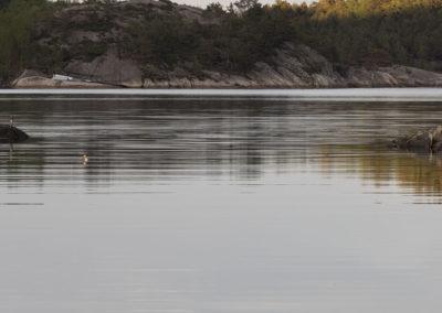 Vår, og mai, og en rolig kveld i Skogsøysundet.