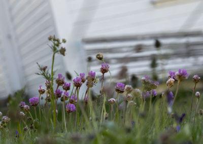 Det sikre vårtegnet utenfor skolehuset på Landøy. Det er vår!